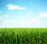 7112508-green-grass-and-clear-blue-sky-with-rare-clouds